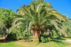 Grote mooie groene palm in een tropisch exotisch botanisch pari stock afbeelding
