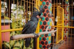 Grote mooie kleurrijke papegaai Royalty-vrije Stock Fotografie
