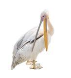 Grote mooie witte die pelikaan op wit wordt geïsoleerd De grappige leuke pelikaan van de dierentuinvogel Stock Fotografie