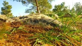 Grote nadruk bij de steen Stock Fotografie