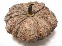Grote natuurlijke bruine die pompoencultivar van een pompoeninstallatie op wit wordt geïsoleerd Royalty-vrije Stock Afbeelding