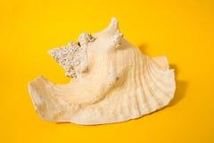 Grote oceanic shell Stock Fotografie