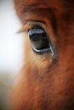 Grote ogen met wimpers royalty-vrije stock foto