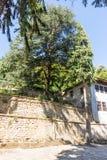 Grote okkernootboom in het Troyan-Klooster, Bulgarije Royalty-vrije Stock Afbeeldingen