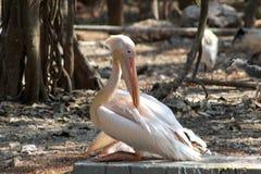Grote ooievaarszitting stil in een dierentuin royalty-vrije stock afbeelding