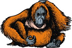 Grote orangoetanaap Royalty-vrije Stock Afbeelding