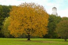 Grote oranje boom op een achtergrond van groene gras en kerk royalty-vrije stock afbeeldingen