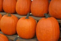 Grote oranje organische pompoenen Royalty-vrije Stock Fotografie