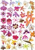 Grote orchideeinzameling Stock Afbeelding