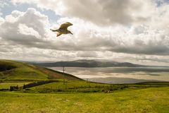 Grote Orme, Wales Stock Foto