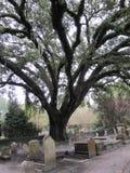 Grote oude boom binnen een historische cenetery in Charleston, Sc Royalty-vrije Stock Afbeelding
