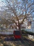 Grote oude boom in de speelplaats Stock Foto's