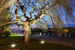 Grote oude boom, die door lantaarns, bij nacht in de lente, de zomer, de herfst, Dnepropetrovsk, Dnipro-stad wordt aangestoken royalty-vrije stock afbeeldingen
