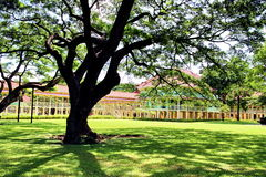 Grote oude boom en Koning Rama 6 Paleis, Huahin stock afbeeldingen