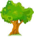 Grote oude boom voor uw ontwerp Stock Fotografie