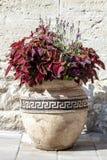 Grote oude ceramische vaas met rode siernetelinstallatie en lavendel royalty-vrije stock foto