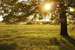 Grote oude eik op een de herfstgebied De zon glanst door takken van de boom royalty-vrije stock afbeeldingen