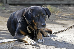 Grote oude hond stock foto's