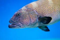 Grote overzees gevormde vissen op een blauwe diepe oceaan Gekleurde oude document achtergrond Zachte nadrukfoto Royalty-vrije Stock Afbeelding