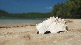 Grote overzeese shell op strand dichte omhooggaand stock video