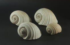 grote overzeese shells royalty-vrije stock foto's
