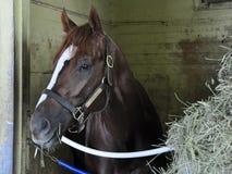 Grote Paardenrennenfoto's door Fleetphoto stock fotografie