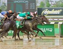 Grote Paardenrennenfoto's van Belmont-Park stock foto's