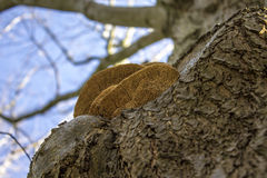 Grote paddestoel op een boom Stock Foto's