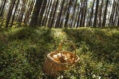 Grote paddestoelen die enkel in het bos worden verzameld Royalty-vrije Stock Foto's