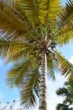 Grote palm Royalty-vrije Stock Fotografie