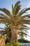 Grote palm tegen de heldere blauwe hemel royalty-vrije stock afbeelding
