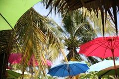 Grote paraplu in het bos royalty-vrije stock foto's