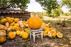 Grote Pompoen voor Halloween stock fotografie
