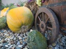 Grote pompoenen en kruiwagen in de tuin Stock Foto's