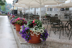 Grote potten van bloemen Stock Fotografie