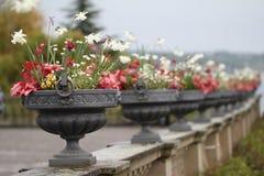 Grote potten van bloemen Stock Afbeelding