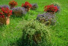 Grote potten van bloemen Stock Foto