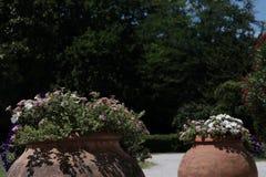 Grote potten van bloemen in exotische tuin royalty-vrije stock foto