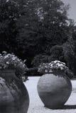 Grote potten van bloemen in exotische tuin stock afbeeldingen