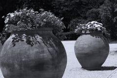 Grote potten van bloemen in exotische tuin royalty-vrije stock foto's