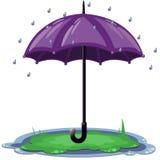 Grote purpere geopende paraplu in de regen op het gras Royalty-vrije Stock Foto's