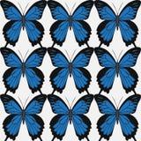 Grote realistische inzameling van kleurrijke vlinders Papilionidae ulysses, de zomer vliegende die insecten voor groetkaarten wor stock illustratie