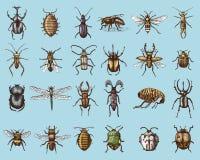 Grote reeks de kevers en bijen van insecteninsecten vele species in de uitstekende houtdruk van de oude hand getrokken stijl gegr royalty-vrije illustratie