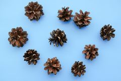 Grote reeks kegels diverse naaldbomen royalty-vrije stock foto's