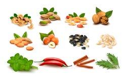 Grote reeks rijpe noten en zaden en kruiden Stock Afbeelding
