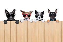 Grote rij van honden Stock Foto