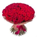 Grote rode die rozenbos op witte achtergrond wordt geïsoleerd Stock Afbeelding