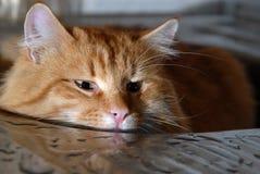 Grote rode kattenzitting in het bassin van de metaalwas Stock Foto