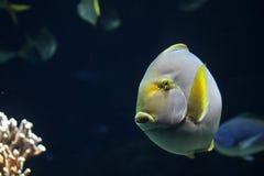 Grote rond gemaakte vissen royalty-vrije stock foto's