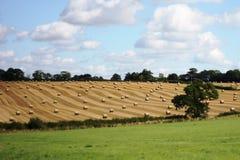 Grote ronde balen op een gebied in landelijke landbouwgrond Stock Afbeeldingen